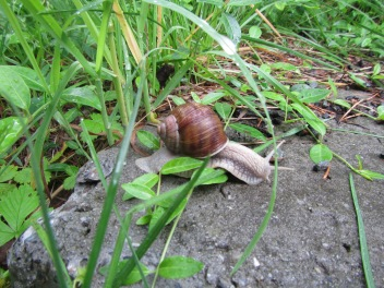 874 - snail