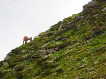 912 - hiking North of chamonix town site