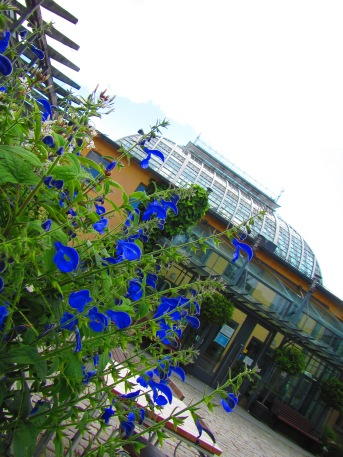 2360 - Walking around Helsinki(the garderns)