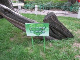 3245 - Walk to tienamen square beijing
