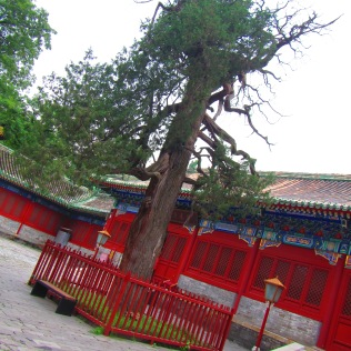 3712 - the Confusis Temple in Beijing