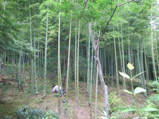 4550 - Kyoto (Tenryu-ji Temple)