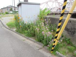 4865 - walking around Kanazawa