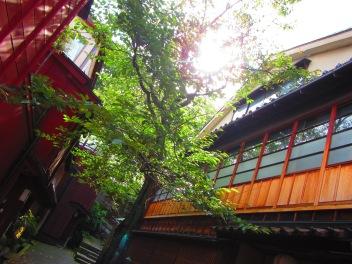 5144 - walking around Kanazawa(the old town)
