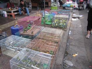 5556 - bird market