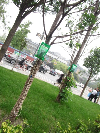 5609 - walking around Xi'an (tree i v )