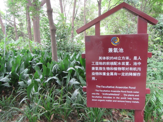 5678 - walking around Chengdu(water filter park)