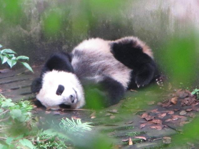 5967 - panda reserve visit