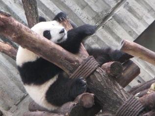 5968 - panda reserve visit