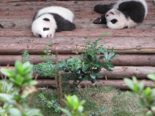 5972 - panda reserve visit
