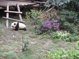 5974 - panda reserve visit