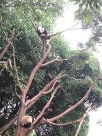 5994 - panda reserve visit