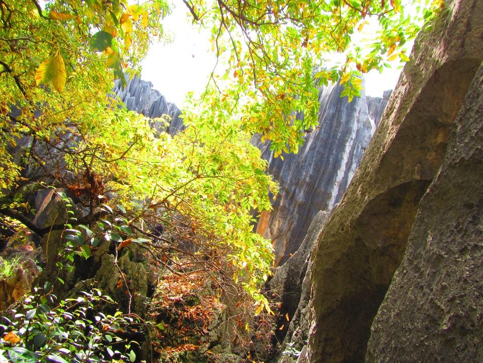 6395 - waking around the stone forest near Kunming