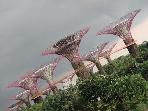 7983 - walking around Singapore(super trees)