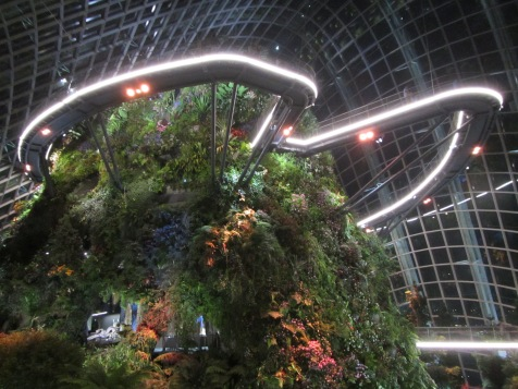 8077 - walking around Singapore (day 2)(in side the cloud forest dome)