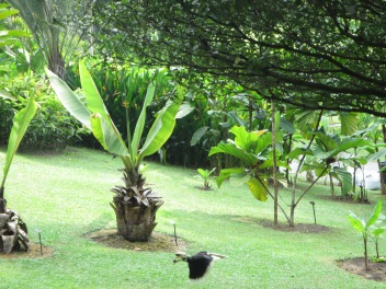 8109 - walking around Singapore (day 3)(the Batanic Gardens)
