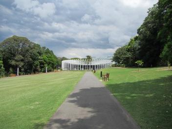 8461 - walking around Sydney(royal botanical gardens)