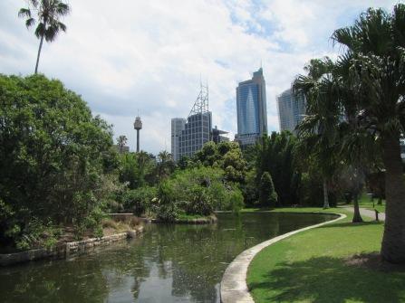 8469 - walking around Sydney(royal botanical gardens)