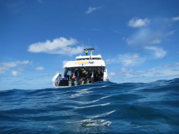 8810 - The Great Barrier Reef tour from Cairns
