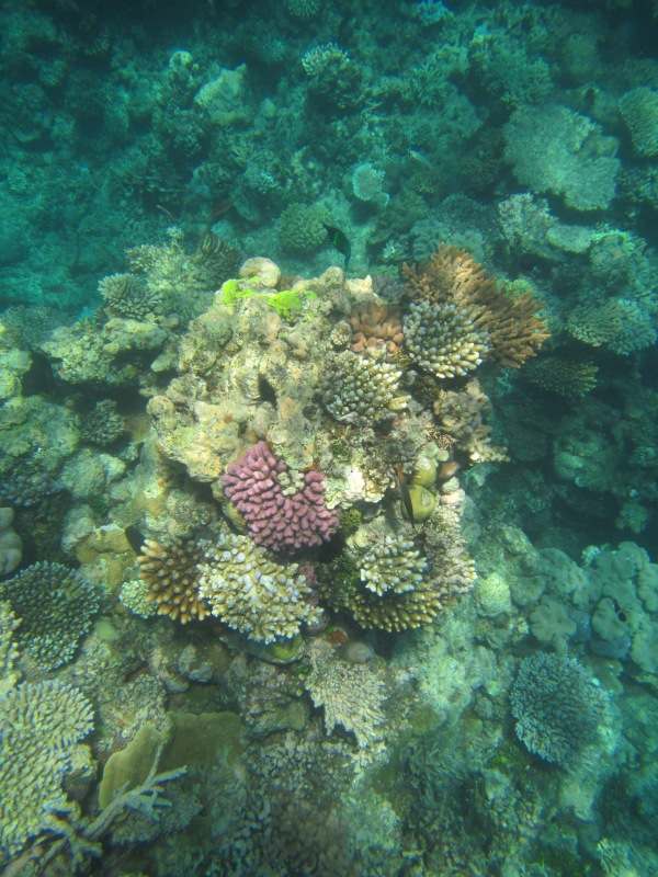 8827 - The Great Barrier Reef tour from Cairns