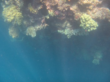 8842 - The Great Barrier Reef tour from Cairns