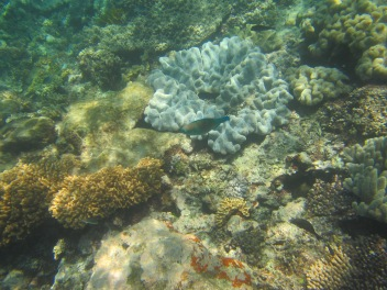 8844 - The Great Barrier Reef tour from Cairns