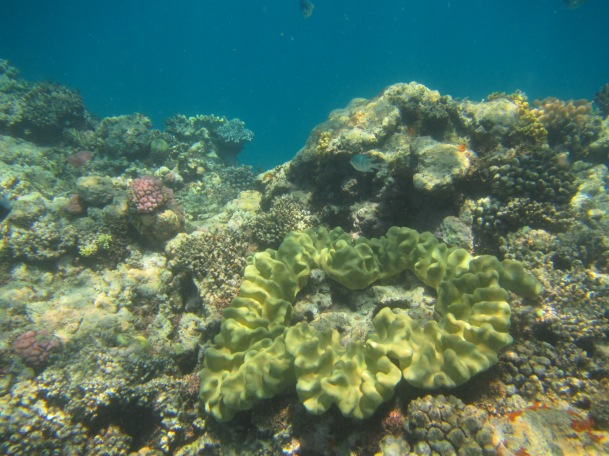 8846 - The Great Barrier Reef tour from Cairns