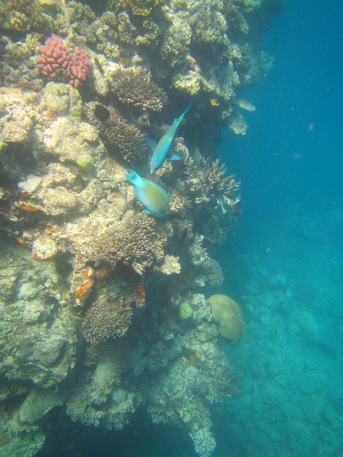 8852 - The Great Barrier Reef tour from Cairns
