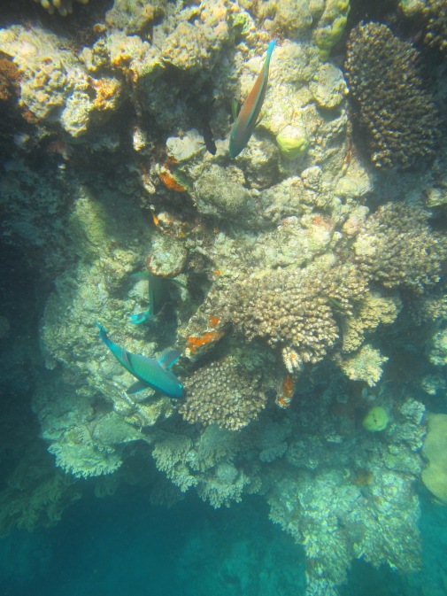 8854 - The Great Barrier Reef tour from Cairns