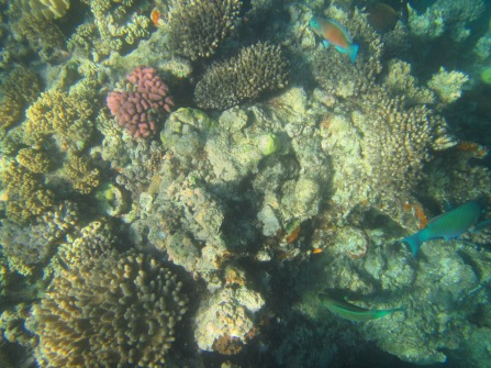 8855 - The Great Barrier Reef tour from Cairns
