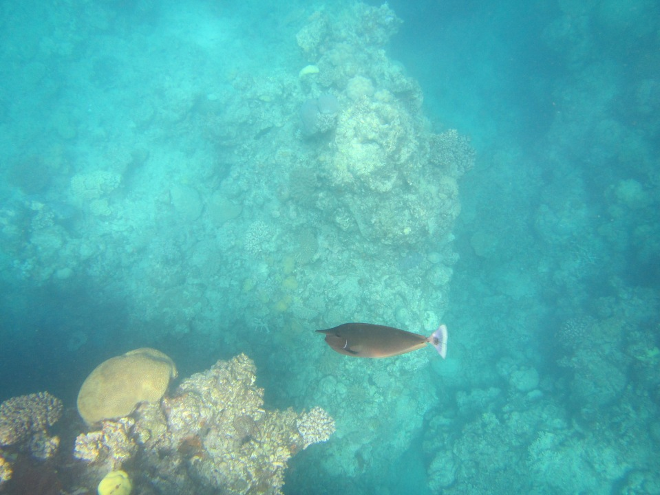 8856 - The Great Barrier Reef tour from Cairns