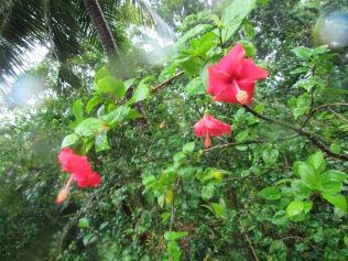9208 - Tonga - Rain , Cultural and Garden Tour