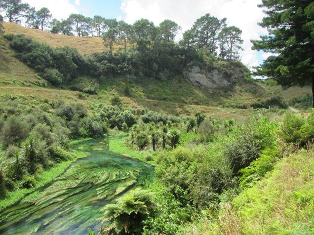 9512 - Blue Spring visit in Putaruru
