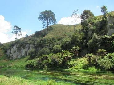 9514 - Blue Spring visit in Putaruru