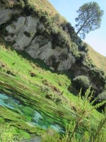 9516 - Blue Spring visit in Putaruru