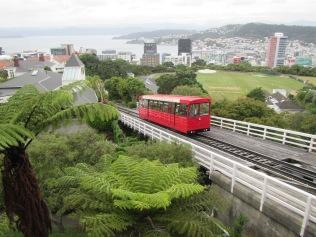 9569 - Walking around Wellington (Day 2 Botenic Gargarden)