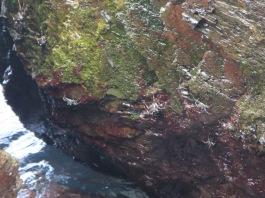 10458 - walking around and swimming at Yasawa-I-Rara Island