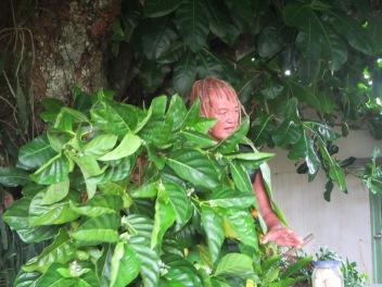 10606 - Rarotonga - Nature walk with PA