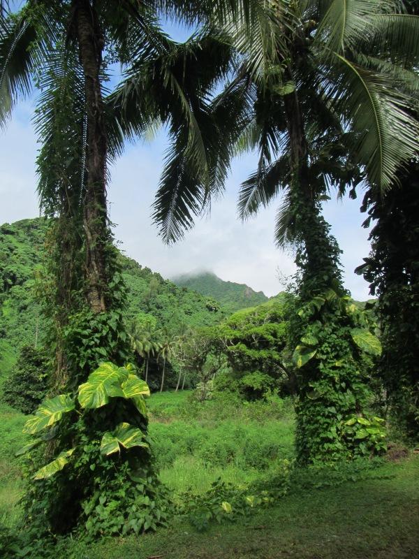 10613 - Rarotonga - Nature walk with PA