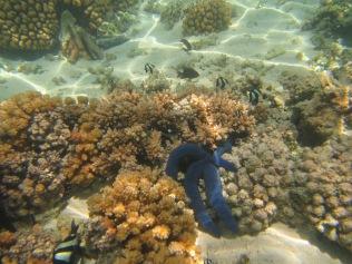 10651 - Aitutaki - Air mattress tour over the coral