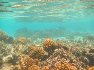 10676 - Aitutaki - Air mattress tour over the coral