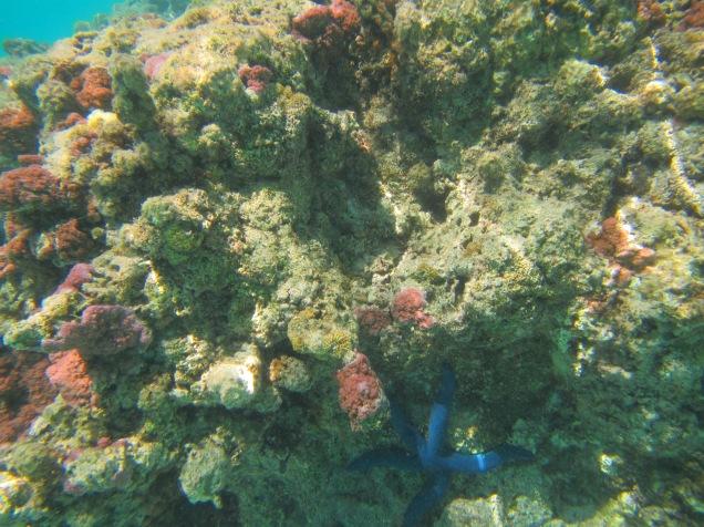 10696 - Aitutaki - Air mattress tour over the coral