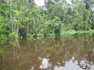 13036 - Day 2 on our river cruise of the Amazon (Rio Napo)