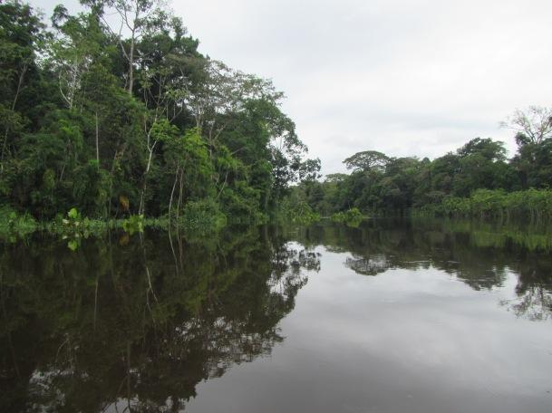 13037 - Day 2 on our river cruise of the Amazon (Rio Napo)