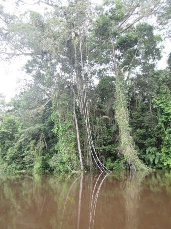 13042 - Day 2 on our river cruise of the Amazon (Rio Napo)