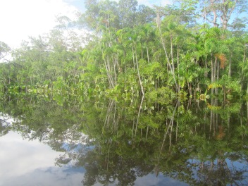 13063 - Day 2 on our river cruise of the Amazon (Rio Napo)