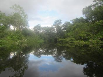 13079 - Day 2 on our river cruise of the Amazon (Rio Napo)