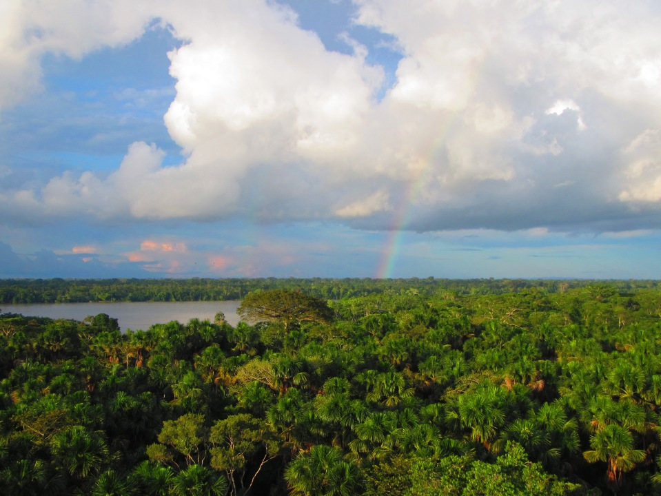 13247 - Day 4 on our river cruise of the Amazon (Rio Napo)